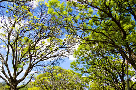 Sky opening between fresh green branches Stock Photo - 5226410