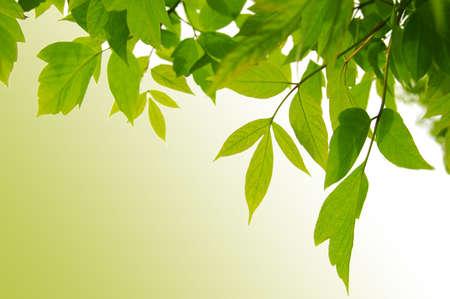 frame of green leaves over light green back photo