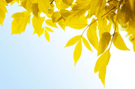 Frame of yellow leaves over light blue background Stock Photo - 5665448