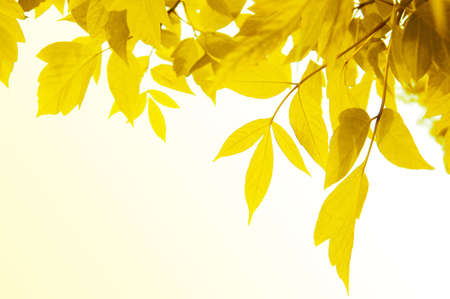 Frame of yellow leaves over light yellow back Stock Photo - 5690958