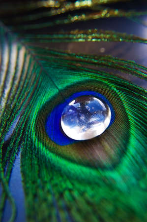 Peacock feather with glass stone like drop photo