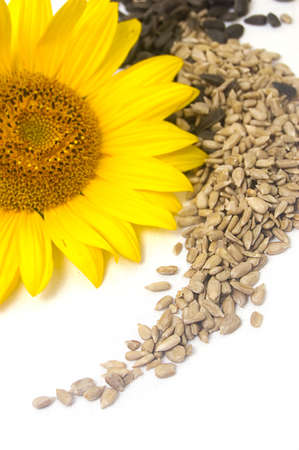 Sunflower, white kernels and black seeds Stock Photo