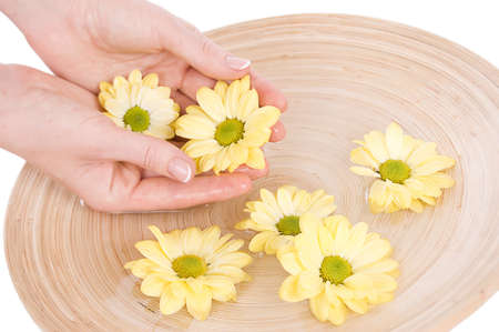 Woman hands and flower in bucket of water isolated Stock Photo - 10697820