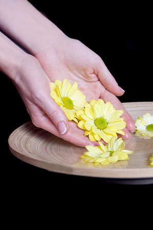 Woman hands and flower in bucket of water isolatedon black photo