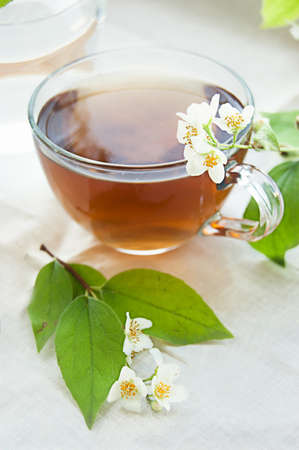 Cup of green tea with jasmine over light back photo