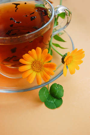 Curative tea with calendula flowers on orange background Stock Photo - 12664521