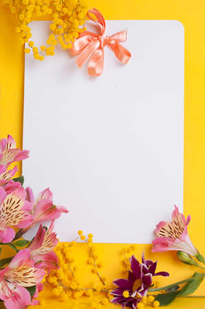 mimosa: Decorative card with mimosa over white