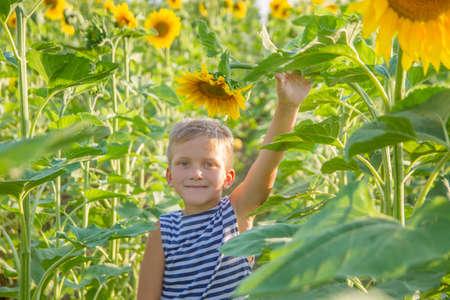 Smiling boy among sunflower field