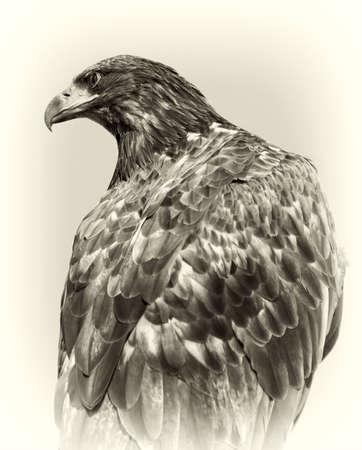 Image of predatory bird in the style retro. Stock Photo