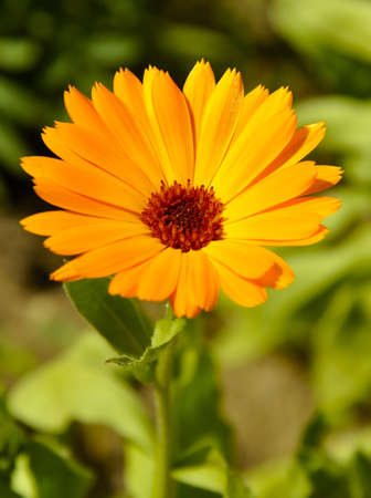 Orange flower in a habitat.