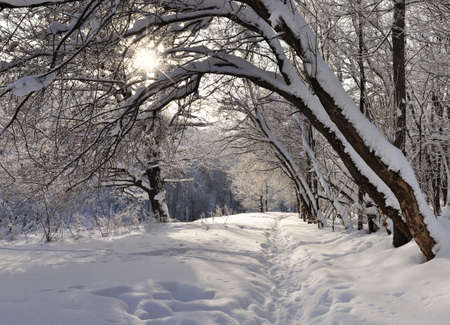 Winter forest in sunny day. Stock Photo