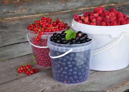 Still life of garden berries.