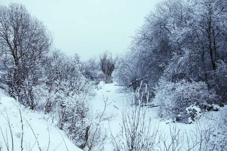 Winter landscape on the river photo