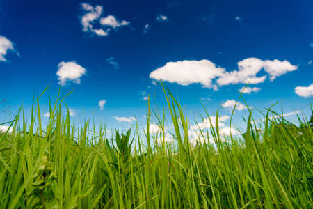 Peaceful summer rural landscape in wide field with green grass and clouds