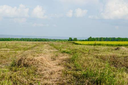 haymaking: Hay in wide peaceful summer field in countryside