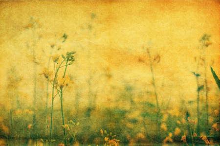 Yellow wildflowers, retro styled yellowed postcard photo