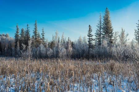 Winter sunny landscape in Siberia, Russian Federation