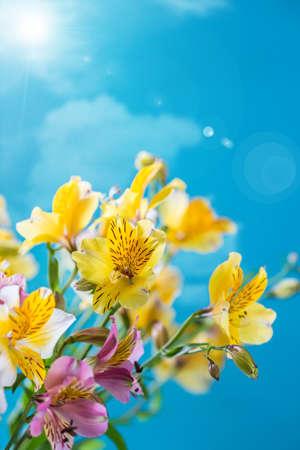 Alstroemelias flowers on blue sky