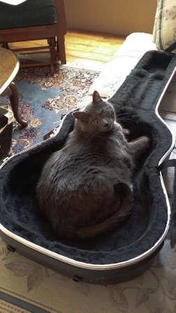guitar case: Gato azul ruso con los ojos verdes sentado en un estuche de guitarra