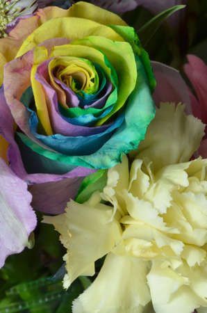 Rainbow Rose with Carnation for Springtime Colors