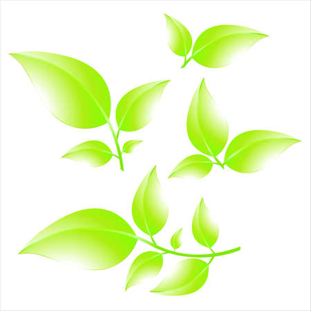 Collection of green branches isolated on white background. Summer leaves. Vector illustration