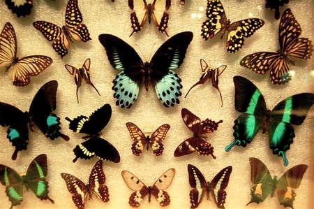 Butterfly exhibit Reklamní fotografie