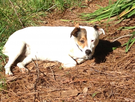 Dog at rest Stock fotó