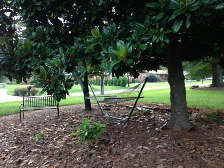 hammock under a big tree