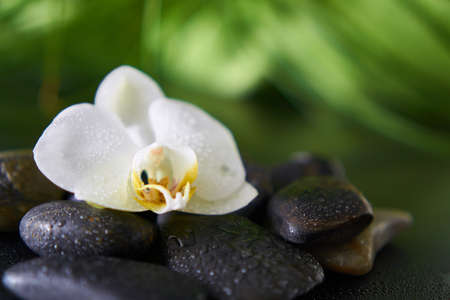 black stones: White orchid with wet black stones