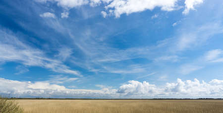 nature conservancy: Panorama of a nature reserve with plenty of reeds, blue sky and cumulus clouds on a summer day Stock Photo
