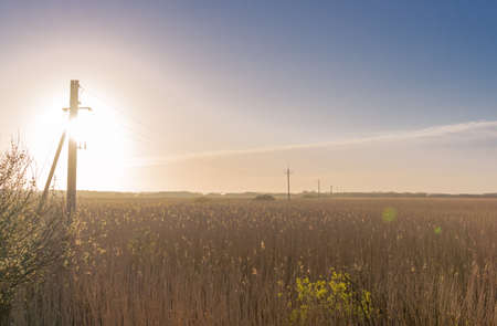 transmission line: Sunrise in the reed grass with an old transmission line