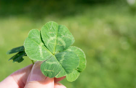 fourleaved: Holding a four-leaved clover on a sunny day
