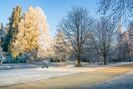 traquil scene: Winter landscape, trees in the park covered with a little snow, as dusted with powdered sugar, sunshine and blue sky