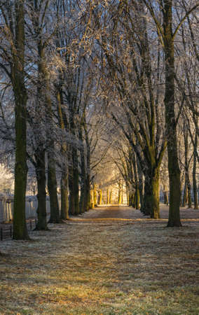 Path on a frosty winter morning, on Either side are trees in a row and at the end you can see the light of the sunrise, the sunbeams glow golden yellow through the bare branches on the way, copyspace
