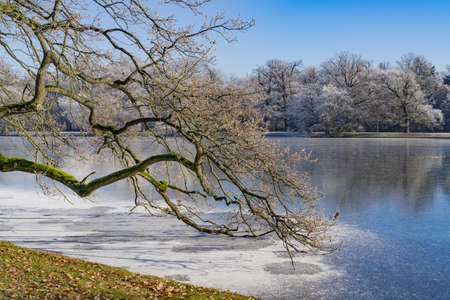 The branches of a tree rise in the semi-frozen lake, the trees on the other side are covered with snow, clittering cold, sunshine, and blue sky