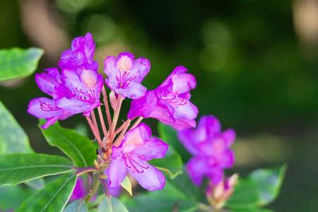 Beautiful pink flowers in the garden Zdjęcie Seryjne