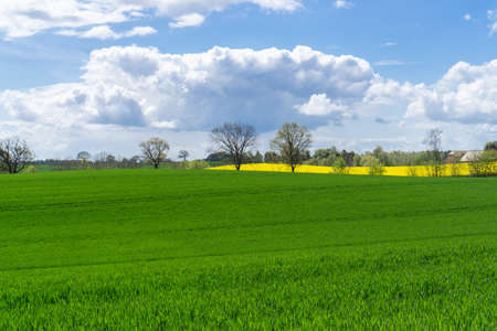 Beautiful landscape on the German Baltic coast region with green fields, trees and blooming rape field