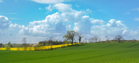 Beautiful landscape on the German Baltic coast region with green fields, trees and blooming rape field, panorama