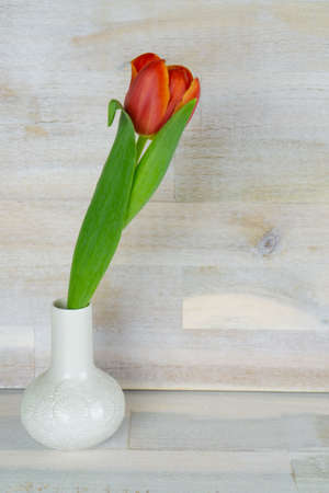 Red tulip in a white vase, wooden background with copy space Stok Fotoğraf