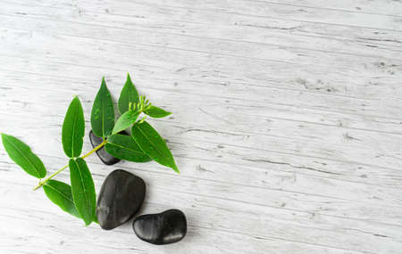 Black stones and a green plant branch on wood background, copy space