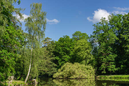 Small lake in the park in sunshine with reflections in the water Zdjęcie Seryjne