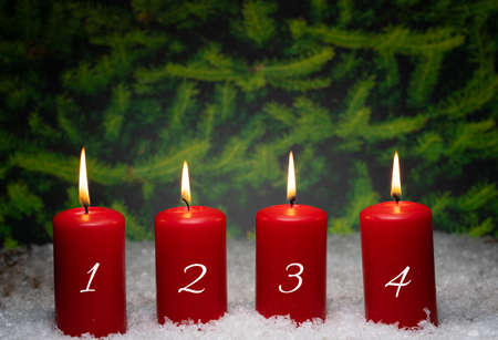 Four burning Advent candles in the snow, in the background fir trees Stok Fotoğraf