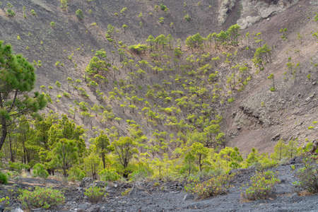 View of the crater of the San Antonio volcano on the Canary Island of La Palma