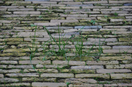 A ground level view of an uneven old cobbled road. The disused road has grass growing in between the moss covered stones.