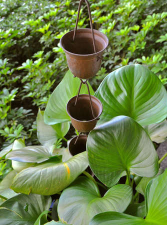 Garden feature of bronze cups which channel rainfall down the chains into the plant pots of lush greenery.