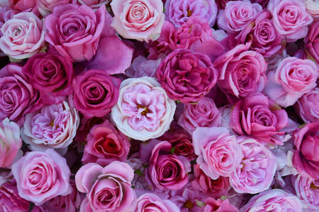 An aerial view of a flatlay of assorted roses in full bloom in a variety of shades and tones of pink, cream and peach.
