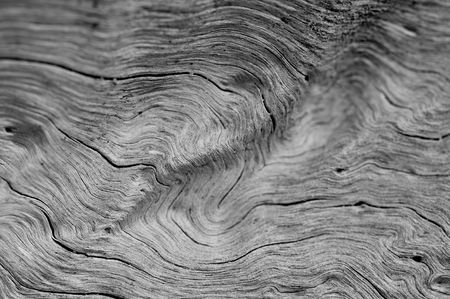 old macro: macro close up of knotted driftwood Stock Photo