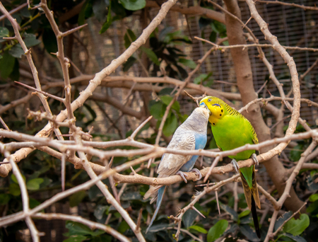 love birds 版權商用圖片