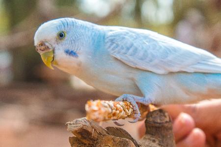 blue bird Stockfoto
