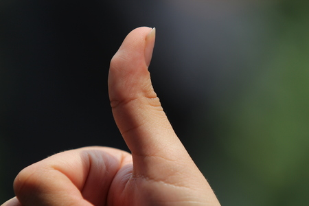 Thumb of the hand